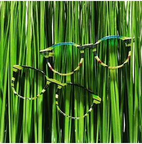 visuel herbe monture sur mesure acetate de cellulose C l'optique lunetorologisterie opticien indépendant strasbourg alsace bas rhin claude fersing luneterologisterie